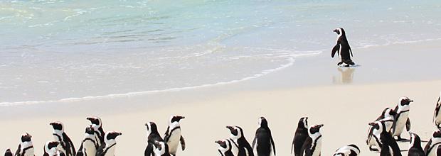 Google Pingouin, beaucoup de bruit pour rien !